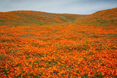 Antelope Valley 9.jpg