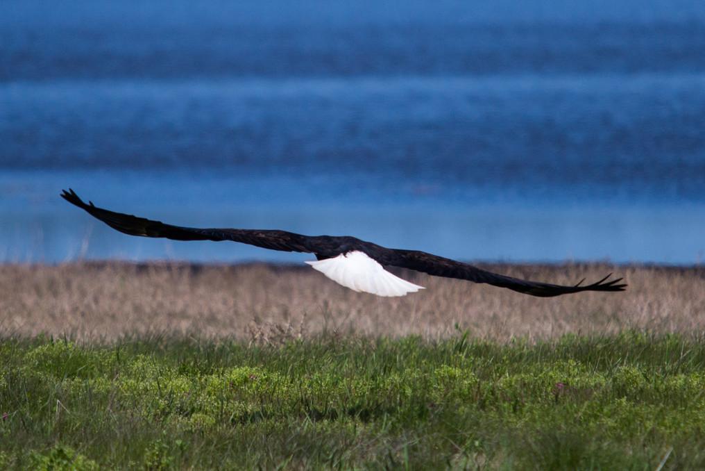 Birds 8.jpg