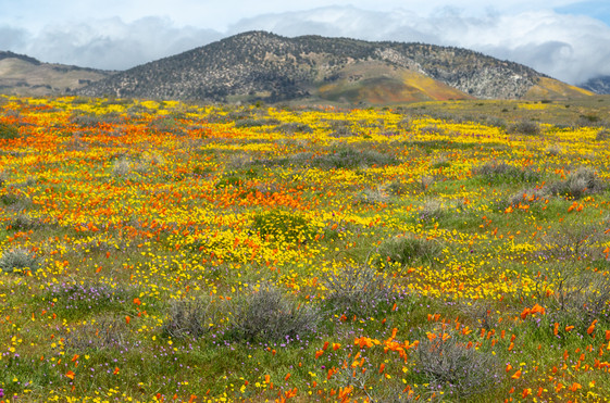 Tejon Ranch 3.jpg