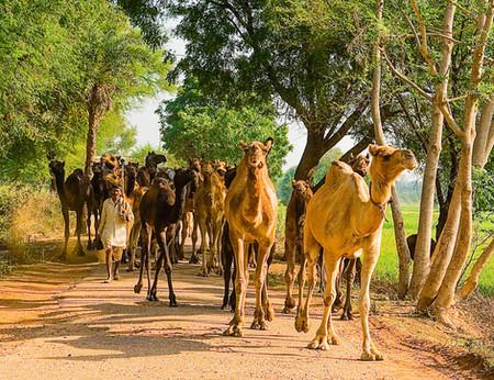 Rajasthan 80.1.jpg
