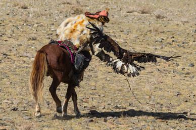 Mongolia Eagle Hunter 15.jpg