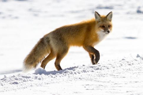 Wild Animals in Winter23.jpg