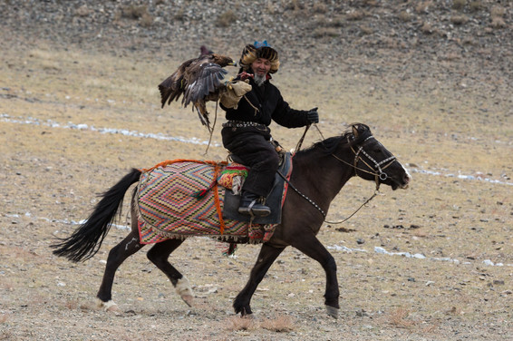 Mongolia Eagle Hunter 32.jpg