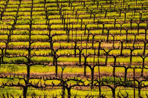 0503_Mustard_057California Spring 21.jpg