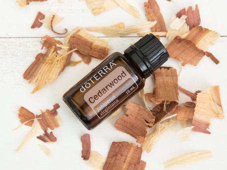 Cedarwood Oil Uses and Benefits