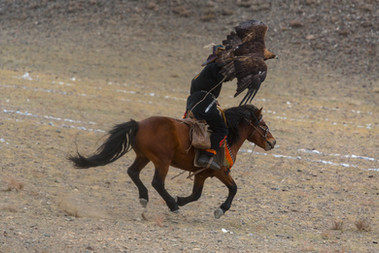 Mongolia Eagle Hunter 25.jpg