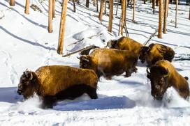 Wild Animals in Winter3.jpg