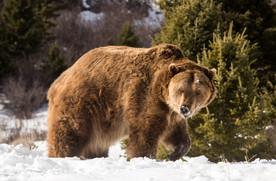 Wild Animals in Winter18.jpg