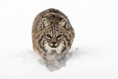 Wild Animals in Winter20.jpg