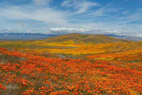 Antelope Valley 11.jpg