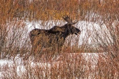 Wild Animals in Winter21.jpg