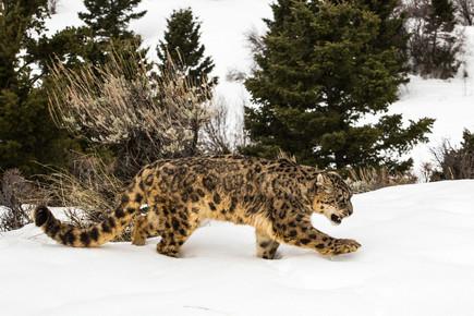Wild Animals in Winter14.jpg