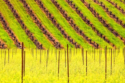 0602__449California Spring 15.jpg