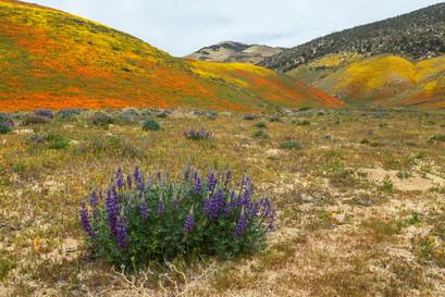 Tejon Ranch 4.jpg