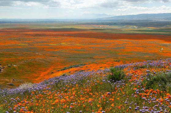 Antelope Valley 6.jpg