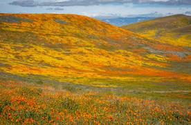Antelope Valley 4.jpg