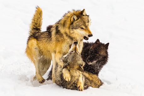 Wild Animals in Winter10.jpg