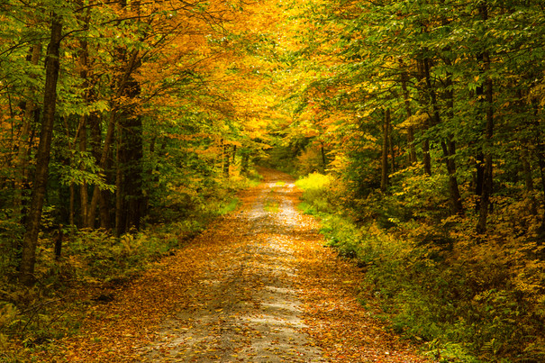 Vermont in Fall16.jpg