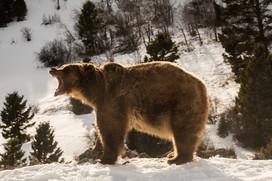 Wild Animals in Winter16.jpg