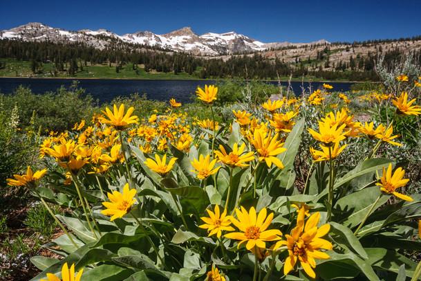 Eastern Sierra 7.jpg