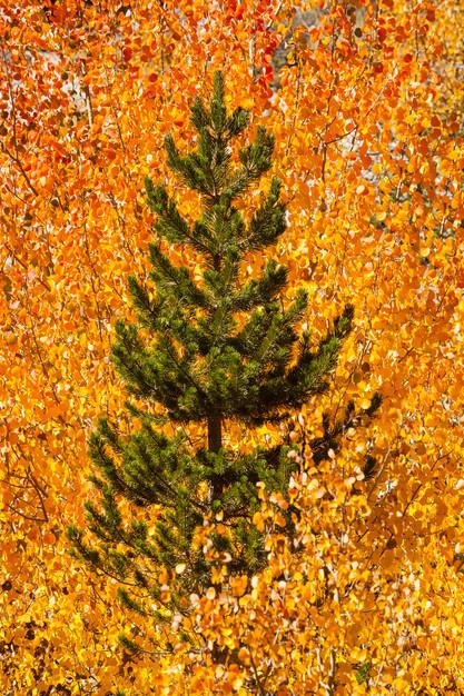 Eastern Sierra 5.jpg