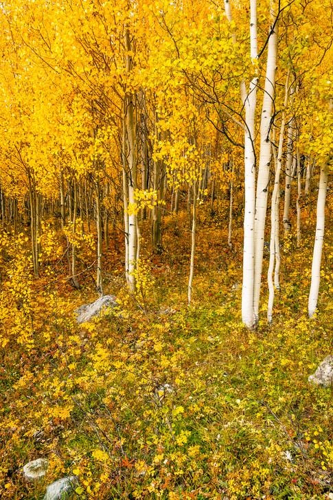 Western Colorado in Autumn 4