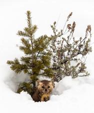 Wild Animals in Winter13.jpg
