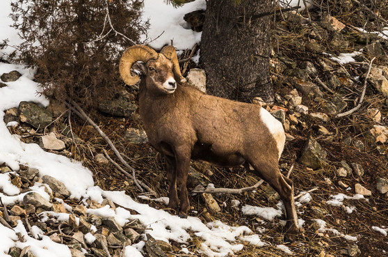 Wild Animals in Winter2.jpg
