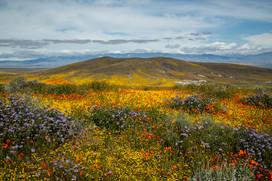 Antelope Valley 5.jpg