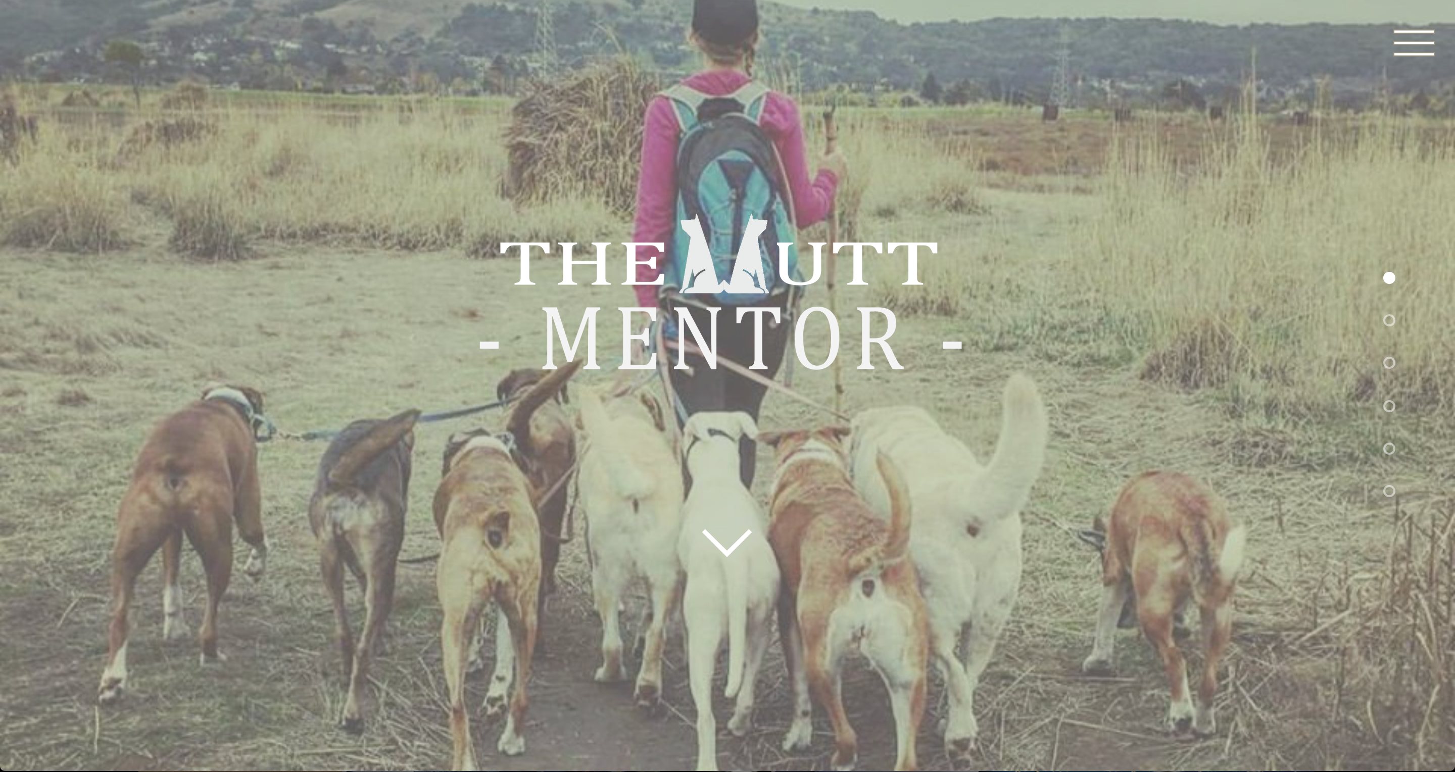 The Mutt Mentor
