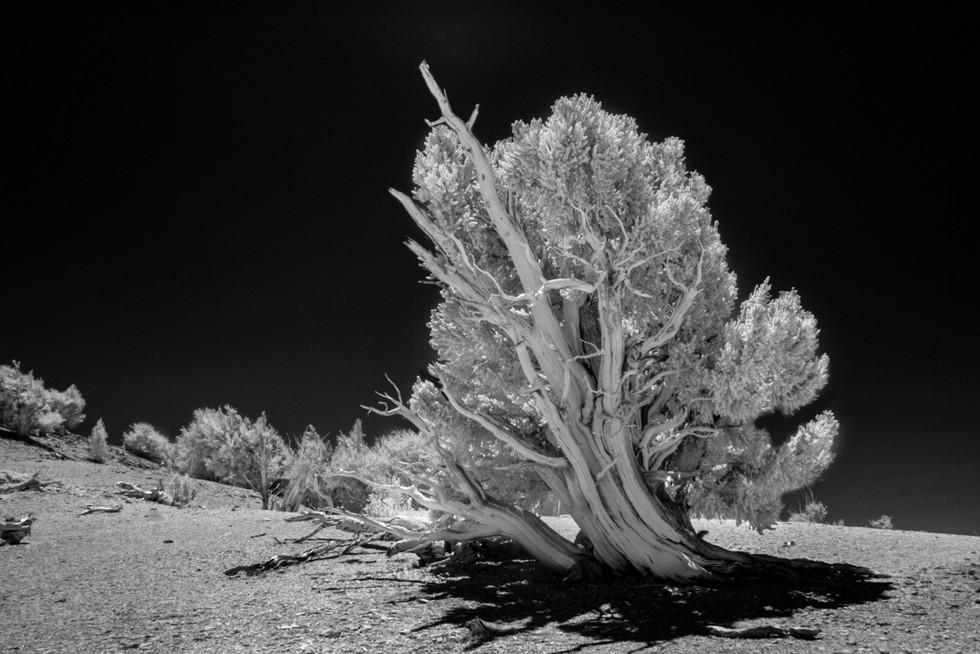Infrared9.jpg