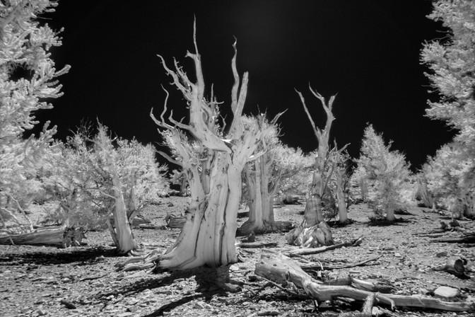 Infrared11.jpg