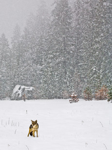 Yosemite in Winter 15.jpg