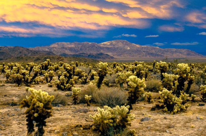 California Desert 1.jpg