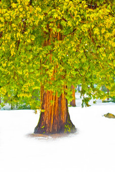Yosemite in Winter 29.jpg