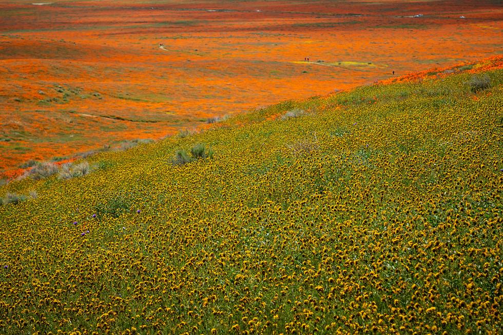 Antelope Valley 8.jpg