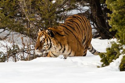 Wild Animals in Winter5.jpg
