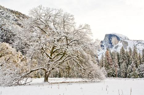 Yosemite in Winter 18.jpg