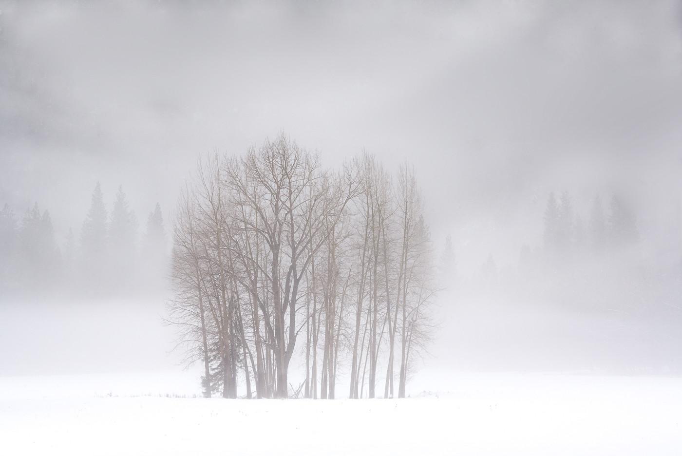 Yosemite in Winter 4.jpg