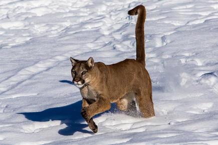 Wild Animals in Winter15.jpg