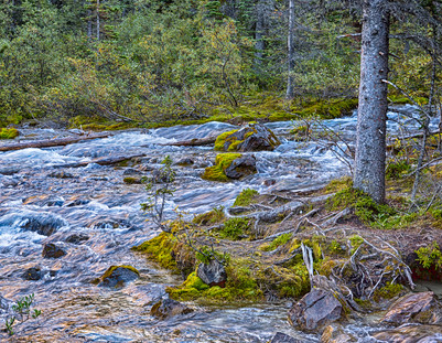 Canadian Rockies21.jpg