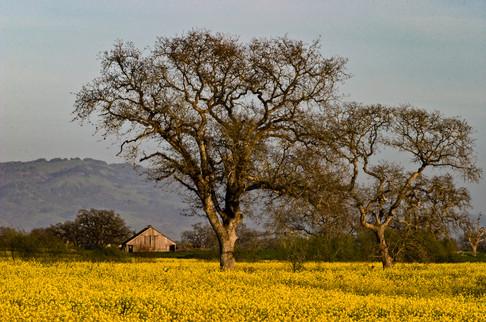0503__421California Spring 17.jpg