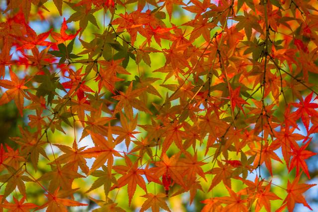 Kyoto59.jpg
