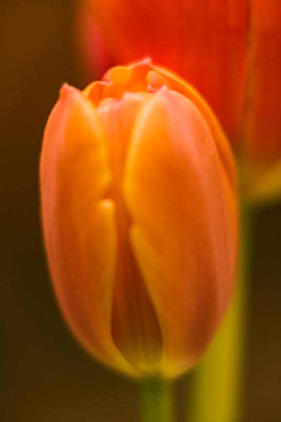 Tulips 6.jpg