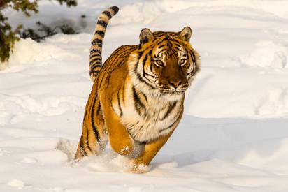 Wild Animals in Winter6.jpg