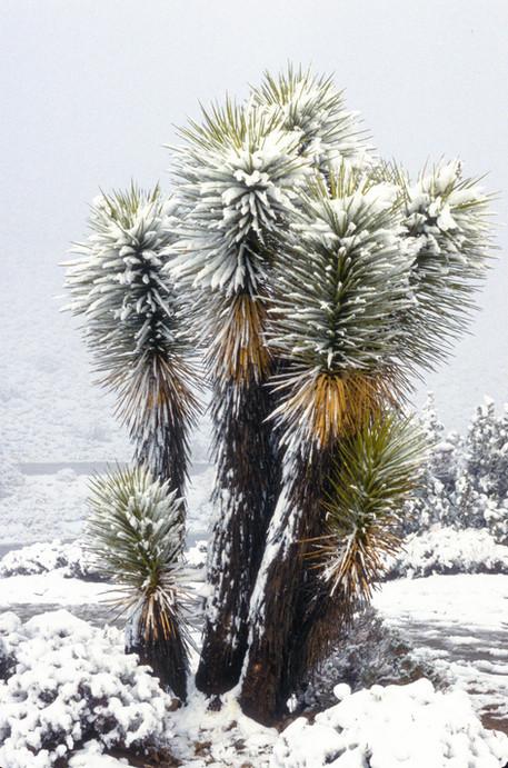 California Desert 2.jpg