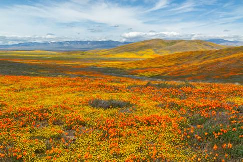 Antelope Valley 10.jpg