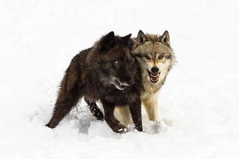 Wild Animals in Winter12.jpg