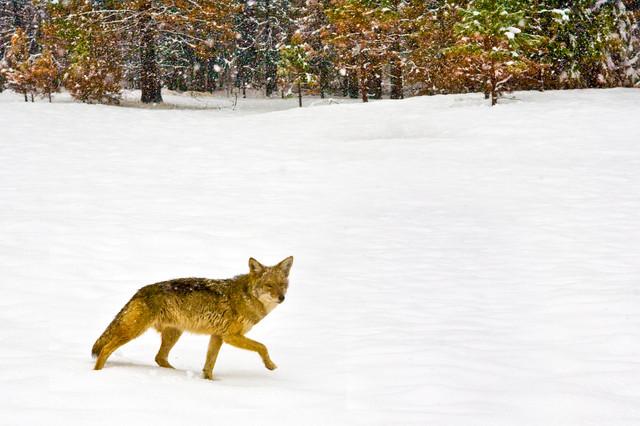 Yosemite in Winter 13.jpg