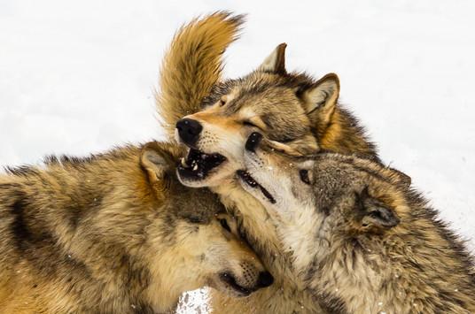 Wild Animals in Winter11.jpg